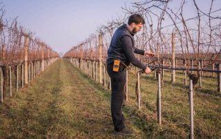 Weingartenarbeit Winter