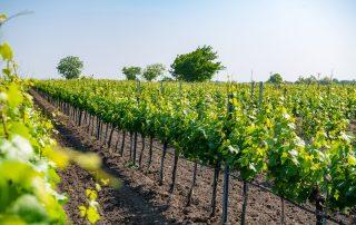 Weinbau Nekowitsch Weingärten